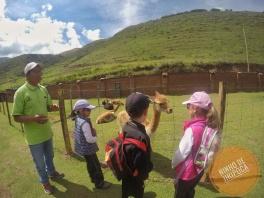 Visita ao Cochahuasi Animal Sanctuary